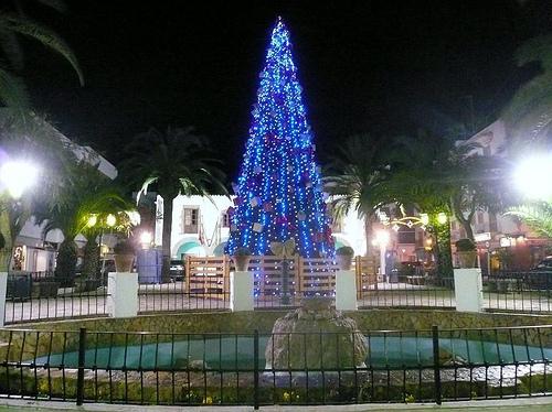 kerstboom-eularia